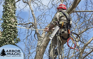 Commercial Tree Care Services