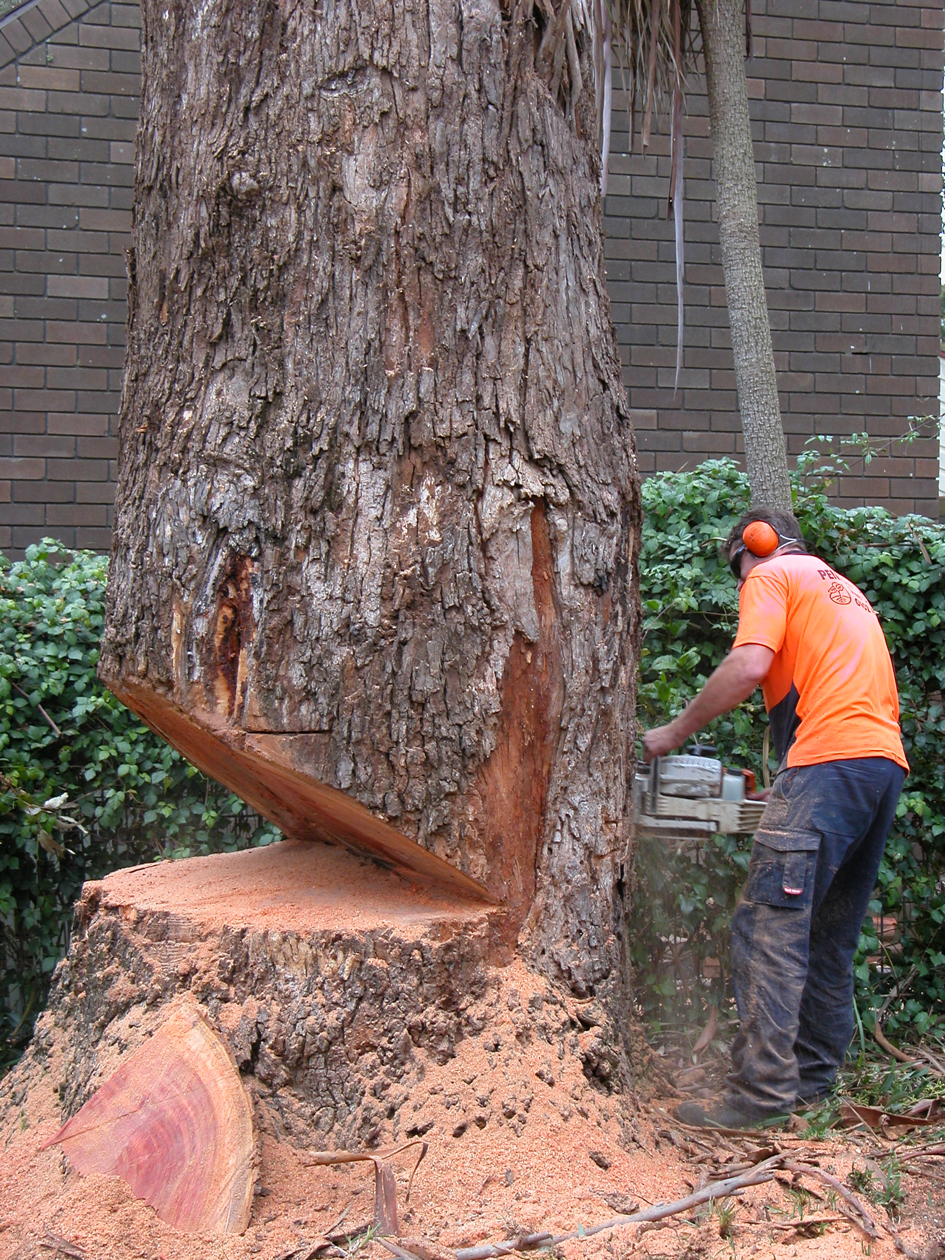 Tree Cutting Notches